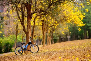 autumn-bike-nature-wallpaper